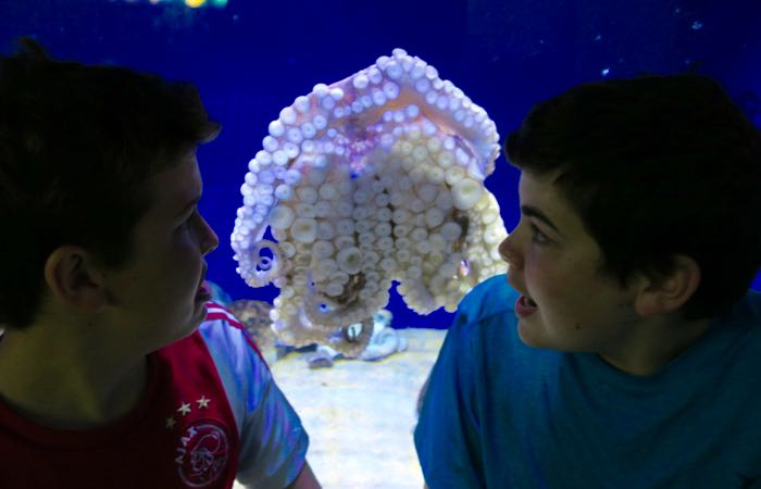 Best Things To Do with Kids in Barcelona: Barcelona Aquarium