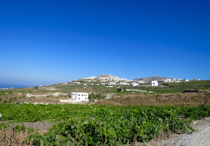 The Santorini countryside is filled with wineries.