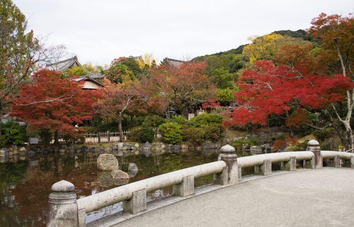 Kyoto's Maruyama Park