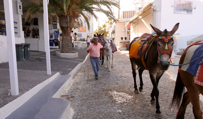 Donkey rides in Fira.