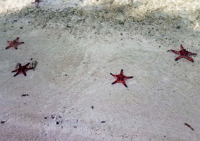 The beach is often strewn with harmless starfish.
