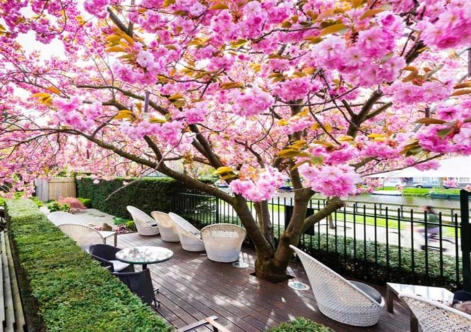 The garden during spring is very colorful.