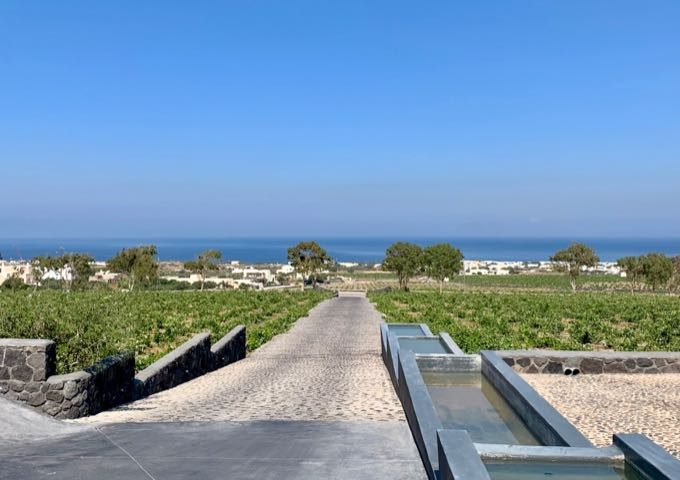 Ocean views and vineyards in Estate Argyros winery