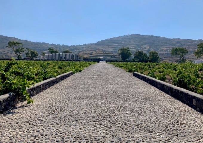 Pebbled driveway at Estate Argyros winery, surrounded by vineyard.