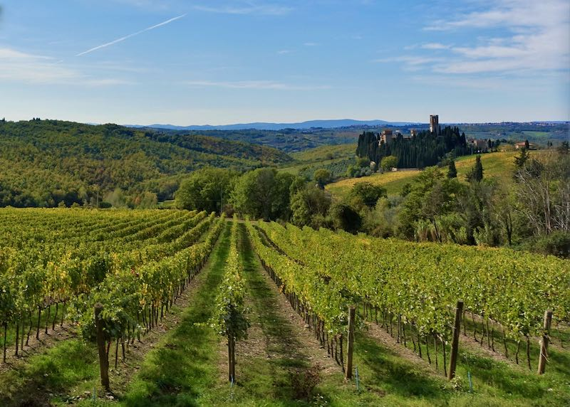 Vineyards in the Tuscany countryside