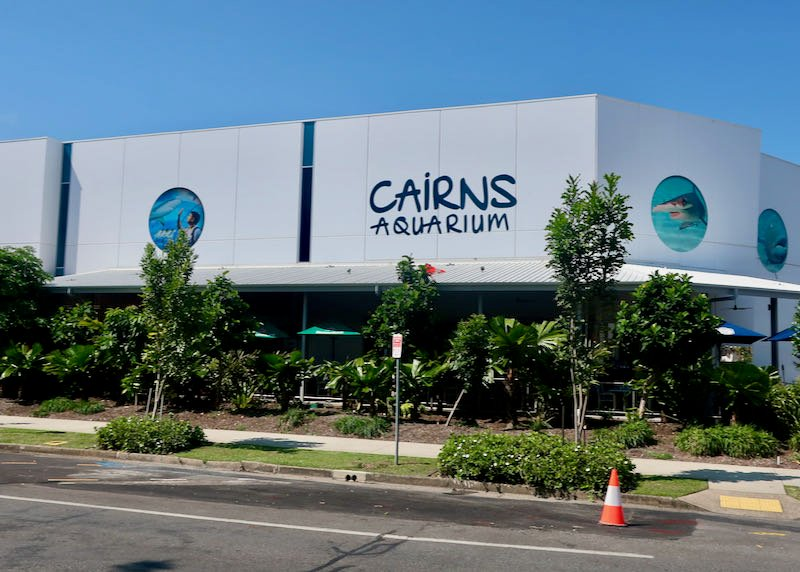 Cairns Aquarium has thousands of marine creatures.