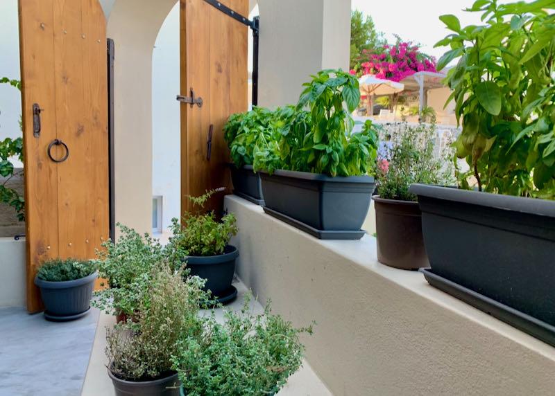 Misteli Restaurant herbs